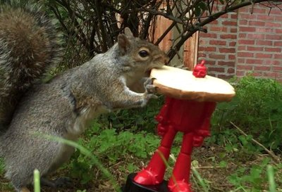 Photo courtesy of the not-regularly-updated Epic Squirrel
