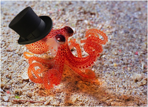 An octopus wearing a top hat, which turns out to be a surprisingly popular image