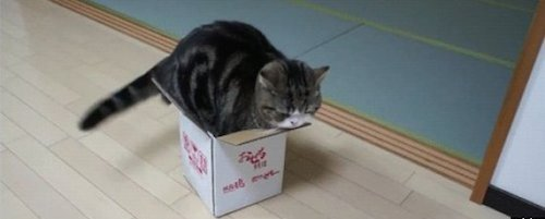 The cat fits in the box.