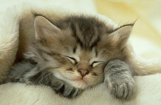 "A cute kitten takes a nap. Do not Google image search ""vasectomy."" Just don't."